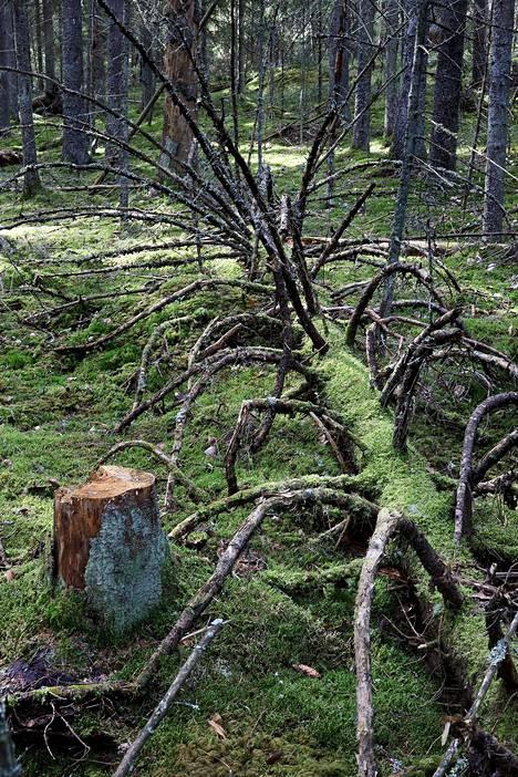 Metsät ovat tärkeitä sekä ilmaston että luonnon monimuotoisuuden kannalta. Yli 30 prosenttia Suomen uhanalaisista lajeista elää metsissä. Kuvassa maanomistajan suojelemaa metsää Salon Perniössä huhtikuussa 2020.