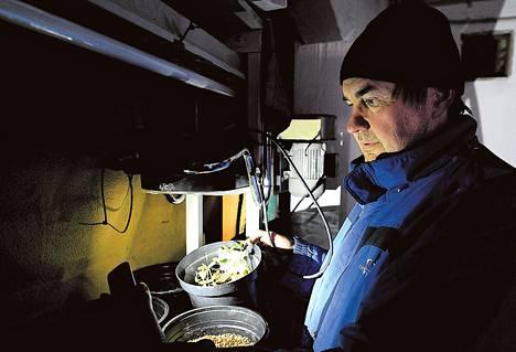 Espoon Siikajärvellä asuva Matti Soini tarkastelee kasvattamiaan kolmiokan taimia taskulampulla. Lumikuormat ja kovat tuulet aiheuttavat kylällä säännöllisesti sähkökatkoja.