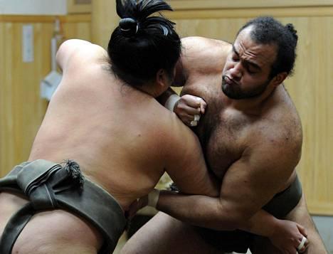 Sumopainija ei voi Japanissa enää painia sänkipartaisena. Kuva on vuodelta 2013.