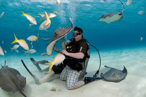 Caymansaarten Stingray Cityssä turistit pääsevät lähikosketuksiin ruskokeihäsrauskujen kanssa.