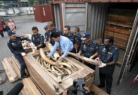 Malesian tulliviranomaiset takavarikoivat maanantaina kaksi konttia, joissa oli noin 1500 norsun syöksyhammasta.