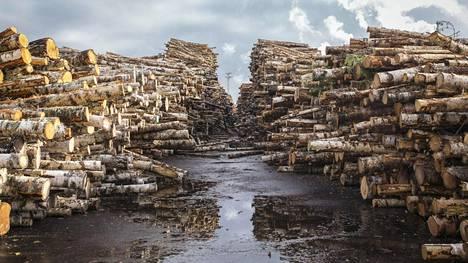Muun muassa Metsä Groupin Äänekosken tehdas tulee lisäämään Suomen puukauppaa.