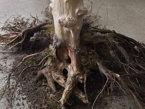 Pernille Egeskov: Man-Maid-Nature, 2021.