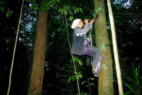 Kiipeilytaidot auttavat Hanna Rostia tutkijan työssä.