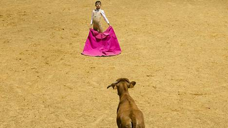 Kaksitoistavuotias Tomás Bastos otti yhteen isänsä kanssa saadakseen opetella härkätaistelijaksi. Bastosilla on kokemusta vasikkaotteluista ja kolhut tuntuvat vasta jälkeenpäin, hän sanoo.