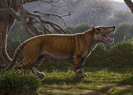 Taiteilijan näkemys yli 20 miljoonaa vuotta sitten eläneestä jättiläisleijonasta eli Simbakubwa kutokaafrikasta.