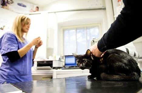 Kissa sai rokotuksen Veteira-asemalla lokakuussa 2013.