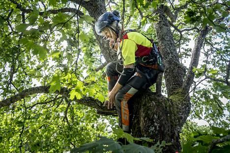 Mare Laakkonen kiipeää vanhoihin puihin köysien avulla.