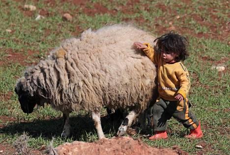 Syyrialainen pakolaislapsi leikki lampaan kanssa Syyrian Azasissa tiistaina.