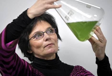 Eva-Mari Aro tutki syanobakteereja vuonna 2008.