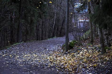 Sateinen aamu marraskuussa Espoon Suvelassa.