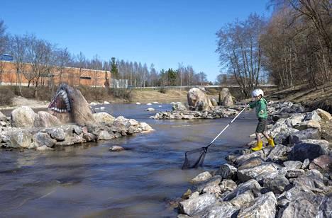 Juho Paju kalasti haavilla sunnuntaina Salossa äitinsä ja veljensä kanssa. Länsi-Suomen Kalatalouskeskus tiedotti lippoamiskiellosta vasta maanantaina.