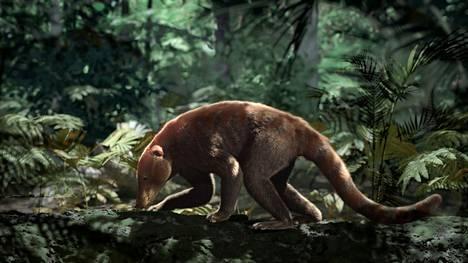 Löytyneen kallon perusteella hahmotellaan Loxolophus.