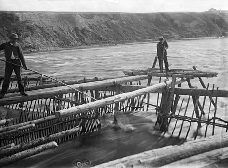 Miehet kalastavat pitkillä haaveilla eli lippoavat Kokemäenjoen padolla vuonna 1908.