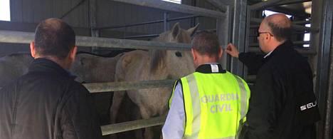 Espanjalainen puolisotilaallinen poliisiorganisaatio Guardia Civil paljasti yhdessä Euroopan poliisiviraston Europolin kanssa suuren kansainvälisen hevosenlihahuijauksen.