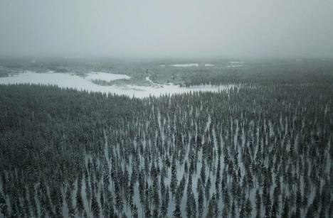 Lapin metsät toimivat Suomen hiilinieluna.