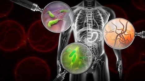 Suolistobakteerit viestivät aivojen kanssa ja osallistuvat koko kehon toiminnan säätelyyn.