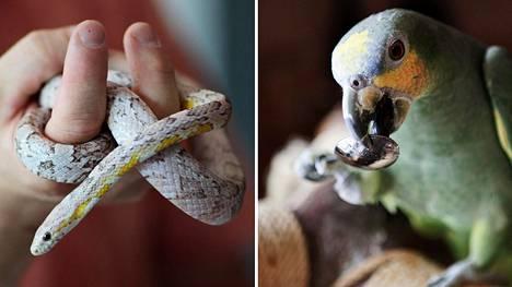 Eksoottisen eläimen, kuten käärmeen tai papukaijan, voi ostaa lemmikiksi, mikäli sitä eivät koske eläintautisäännökset tai Cites-säännökset, joissa on tuontirajoituksia luonnonvaraisille eläimille.
