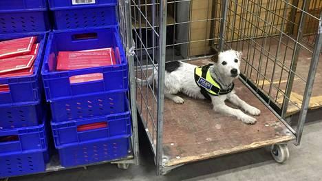 Jekku työskentelee erikoiskoirana Hämeen poliisilaitoksella. Marraskuussa Jekku paljasti huumeita postilähetyksistä. Jatkossa erikoiskoiria voi nähdä myös yleisötapahtumissa.