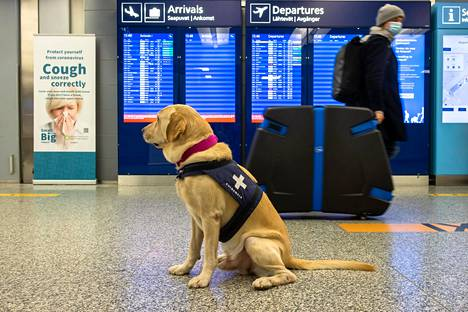 Kaikista Helsinki-Vantaan lentoasemalla saaduista positiivisista koronatestituloksista tutkitaan myös mahdollinen virusmuunnos, eli niin sanottu UK-variantti.