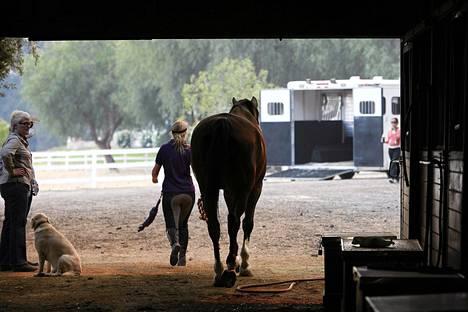 Hevosia evakuoidaan maastopalojen tieltä Kalifornian Camarillossa.
