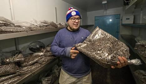 Viikonvaihteessa maanviljelijä Vesa-Matti Marjamäki kävi siivoamassa sirkkakasvattamoaan, jossa varsinainen tuotanto ei ehtinyt edes alkaa.