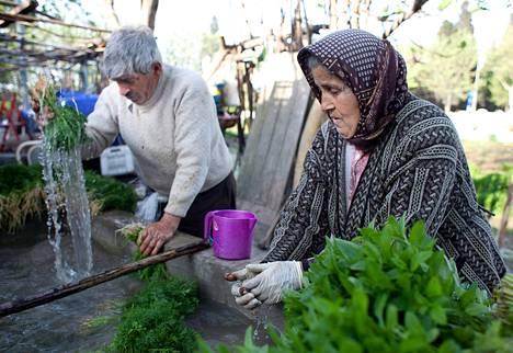 Mustanmeren rannalta Istanbuliin muuttaneet Mustafa ja Havva Kaplan ovat viljelleet vihanneksia maatilkullaan yli 20 vuotta.