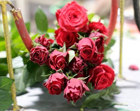 Minaye Flowers -yhtiön ruusutarhassa Etiopian Debre Zeitissa kukat kasvavat nopeasti. Sato korjataan kaksi tai kolme kertaa päivässä.