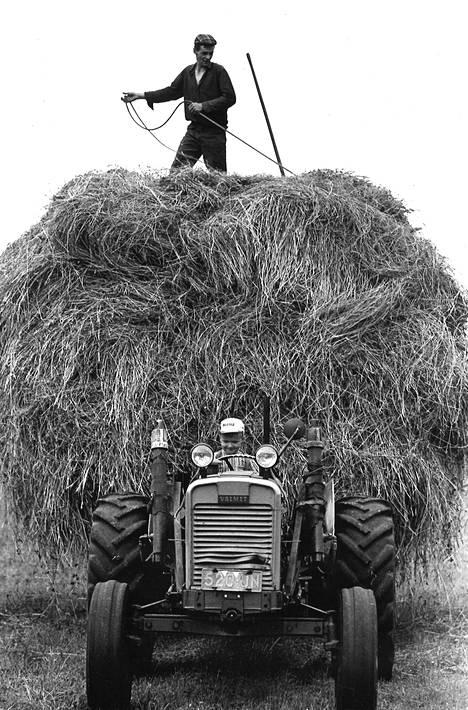 Viimeinen heinäkuorma lähdössä latoon maanviljelijä Tauno Laaksosen pellolla Karkkilassa. Kuormaa sitoo kesälomalainen Rauli Lehmus ja kuormaa seipäältä seipäälle siirtää Kari Koskinen.
