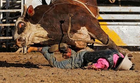 Aboriginaali Sally Malay putoaa härän selästä rodeotapahtumassa Deniliquinissa New South Walesissa Australiassa.