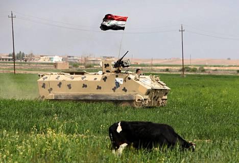 Irakin armeijan joukot etenevät Albu Ajilin pelloilla lähellä Tikritiä maanantaina. Alueella on käynnissä armeijaoperaatio islamistijärjestö Isisin häätämiseksi.