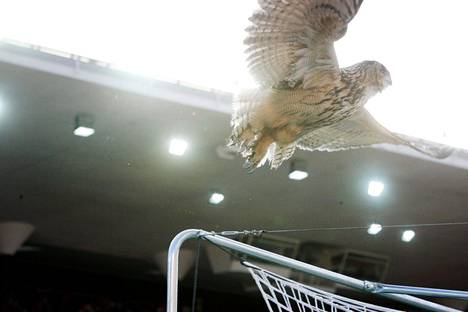 The Bubi Owl flew over the target trees at the Olympic Stadium on June 6, 2007.