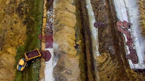 Rekkalasteittain minkkejä haudattiin Nørre Feldingin kylässä Tanskassa marraskuun 12. päivä.