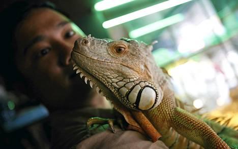 Kuvan iguana on vietnamilainen.
