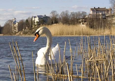 Helsingin ydinkeskustassa sijaitseva Töölönlahti on myös joutsenten ja muiden vesilintujen talvehtimispaikka. Nykyisin kaupungin ilotulituksia järjestetään alueella.