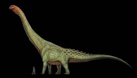 Maailman suurimman koskaan eläneen maaeläimen titteliä kantava patagotitan kuuluu sauropodeihin, jotka tunnetaan pitkästä kaulastaan ja hännästään.