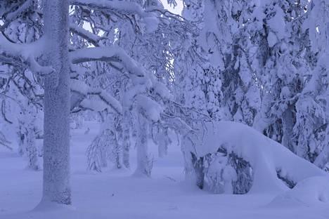 Antti Haatajan palkittu Polar Night Hare -kuva.