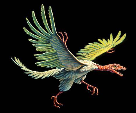 Piirros Archaeopteryx-linnusta