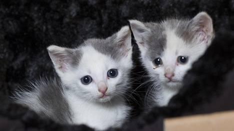 Kissavideot ovat suosittuja sosiaalisessa mediassa.