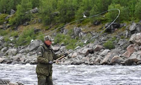 Monet kalastajat suuntaavaat kesäisin Lapin lohiapajille. Perhokalastaja Martti Torala Vaasasta kalastaa lohta Tenojoen rannalla ala-könkäällä Utsjoella heinäkuussa.