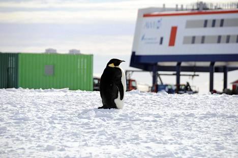 Saksalaisen Neumayer III -tutkimusaseman lähellä asustaa pingviinejä. Ne käyvät joskus aseman liepeillä.