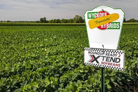 Galienissa Michiganin osavaltiossa Yhdysvalloissa viljellään muuntogeenistä soijapapua ja maissia.