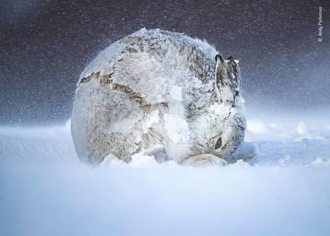 Andy Parkinson vietti viisi viikkoa tarkkaillen metsäjäniksiä lähellä Tomatinia Skotlannissa. Parkinsonin oli odotettava kärsivällisesti paikoillaan jänisten liikkeitä. Ne liikahtivat keskimäärin vain kerran tunnissa. Tämän kuvan hän sai otettua vaikeista sääolosuhteista huolimatta. Hänen sormensa olivat kohmeessa kylmyydestä, ja kamerakin oli hajoamispisteessä. Viimein kuvan jänis liikahti ympyrän muotoon, Parkinson muistelee kuvanottotilannetta.