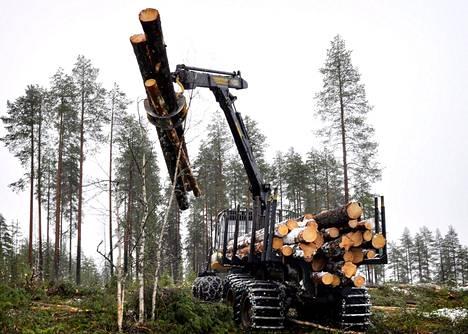 Metsien hakkuiden lisääminen voi johtaa metsäluonnon monimuotoisuuden heikkenemiseen.