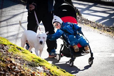 Pontus Sjögren ulkoili poikansa Armas Sjögrenin ja Hommer-koiran kanssa Töölönlahdella keskiviikkona.