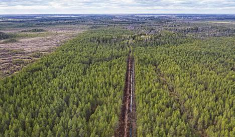 Suurista ja monipuolisista suoalueistaan tunnettuun Valkmusan kansallispuistoon kuuluva Munasuo on osittain pahasti metsittynyt metsäojitusten seurauksena. Nyt Metsähallitus ennallistaa Munasuon takaisin luonnontilaan.
