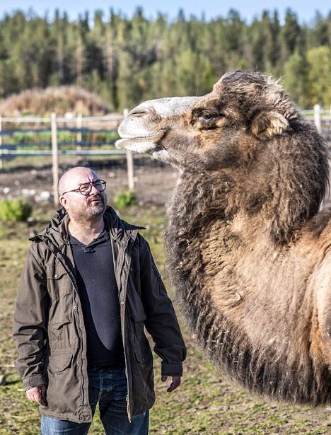 Markus Kiilin naapurissa asuu Hilma-kameli. Sitä hän ei ole hoitanut.