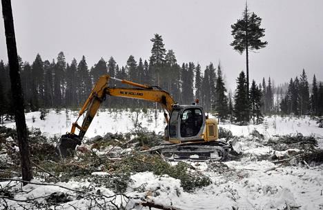 Hakkuun jälkeen Vuorisaaren metsämaata aukaistiin kaivinkoneella. Se helpottaa metsän uudistumista.