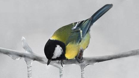 Lasten tiedekysymykset   Aivastelevatko myös linnut?