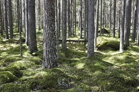 Metsät ovat monimuotoisuuden kannalta tärkeitä, ja niillä on keskeinen rooli myös ilmastonmuutoksen hillinnässä hiilitasapainon ylläpitäjinä. Metsää Liesjärven kansallispuistossa.